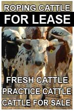 roping cattle for lease