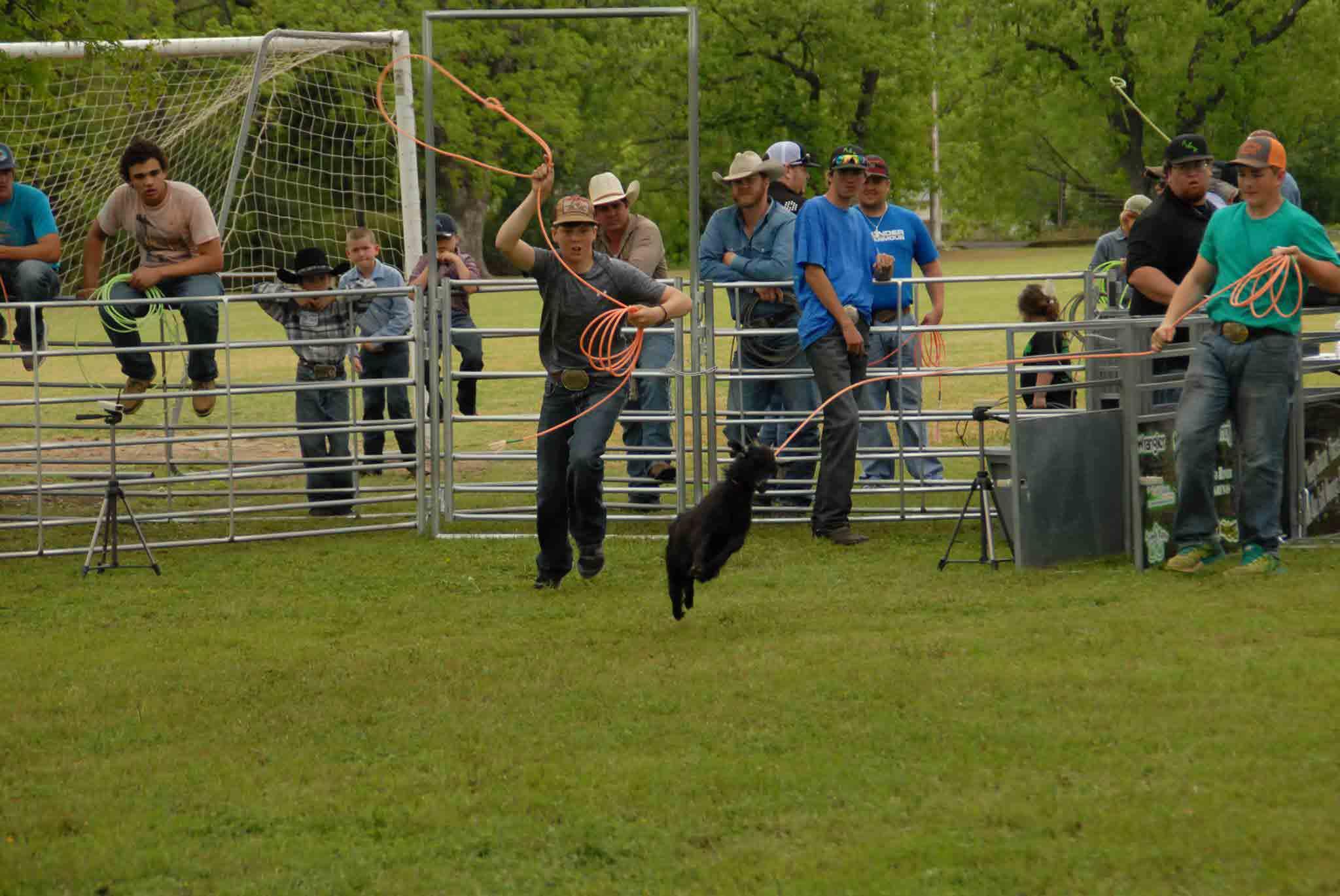 Goat Roping Arenas Goat Panels Goat Roping Chutes
