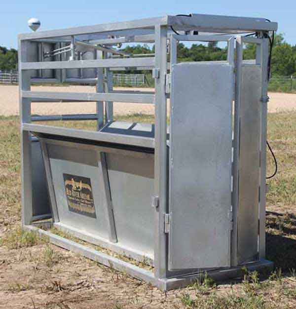 RC100 Combination Steer and Calf Roping Chute 04