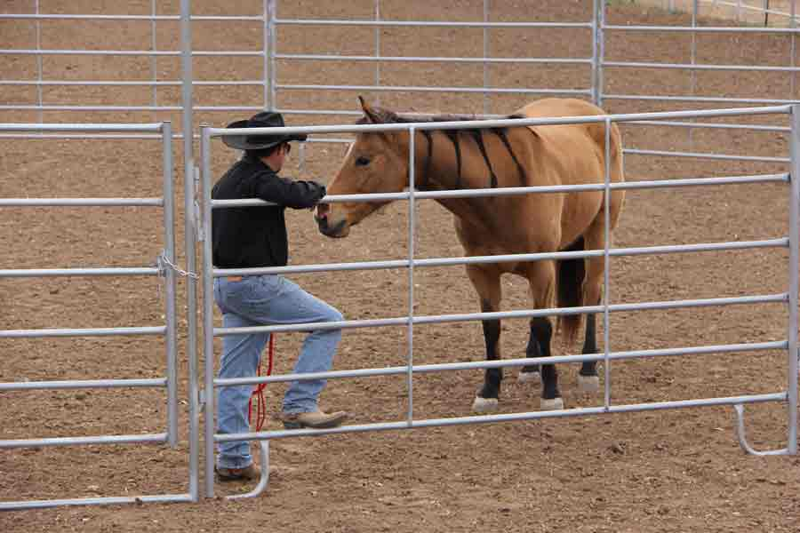 Round Pens From Red River Arenas Round Pens For Sale